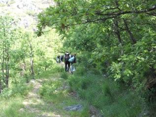 Bajando entre robles hacia las Cuevas de San Martín por la pista de acceso