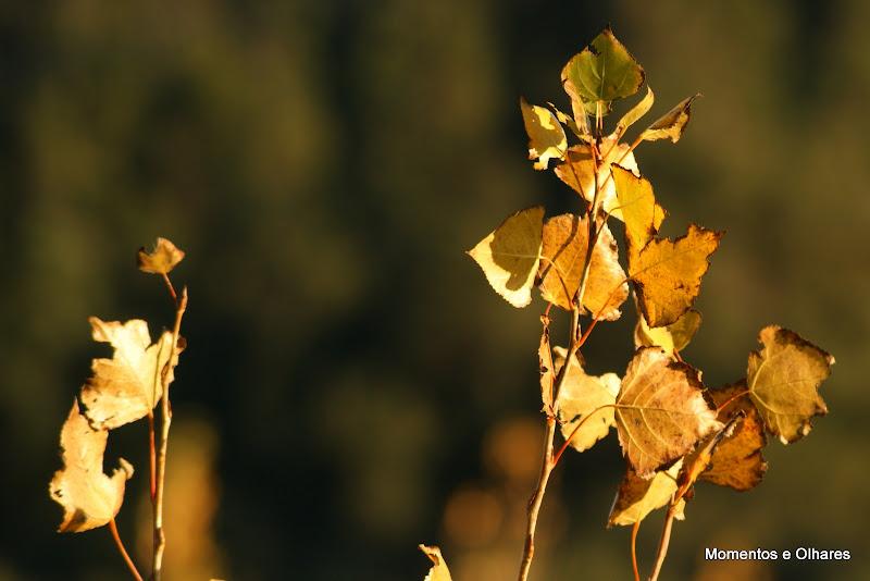 Outono no vale dos Barris