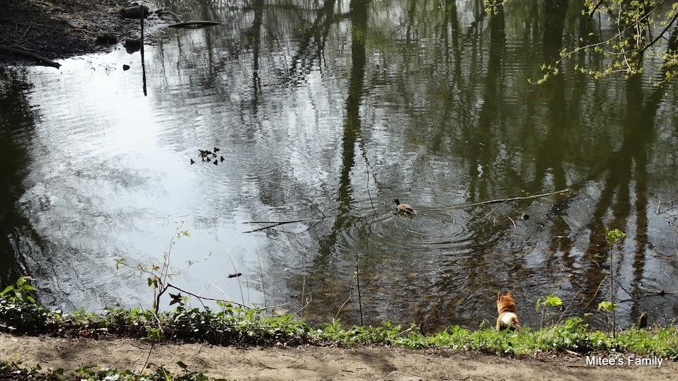 Balades canines en Nord (59)/Pas de Calais (62) - Boulogne-sur-Mer, Calais et Lille - Page 4 DSC01862