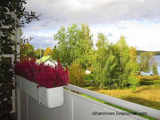 Вереск на балконе будет стоять в ящике до весны