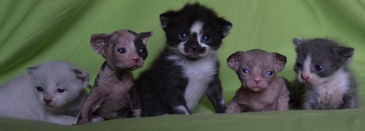 1 er Thème : Quand votre/vos chats étaient chatons Happy%2520Litter%25203%2520week