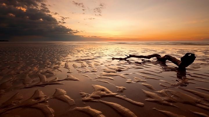 Low Tide Driftwood wallpaper, sunset, beach