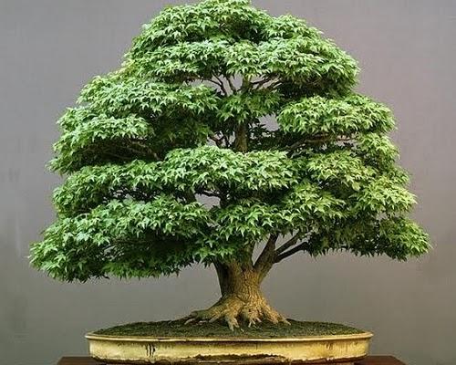 decoracao para jardim japones ? Doitri.com