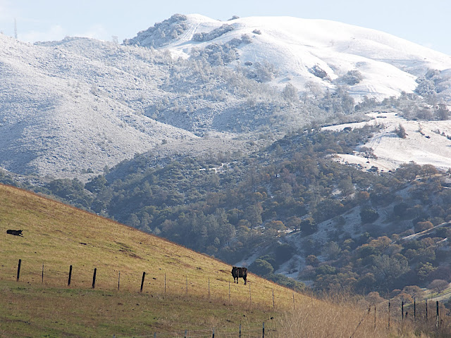 Mt Diablo Snow