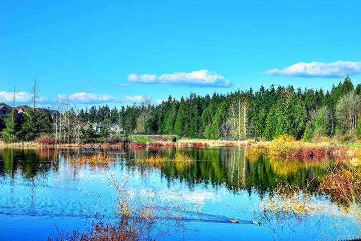 Spring Sahalle pond