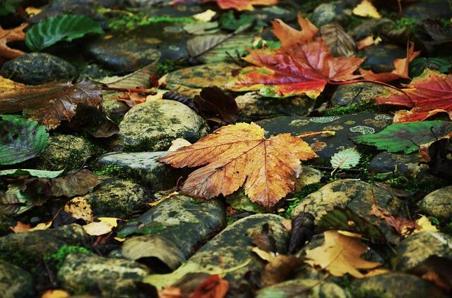 ảnh xác lá mùa thu