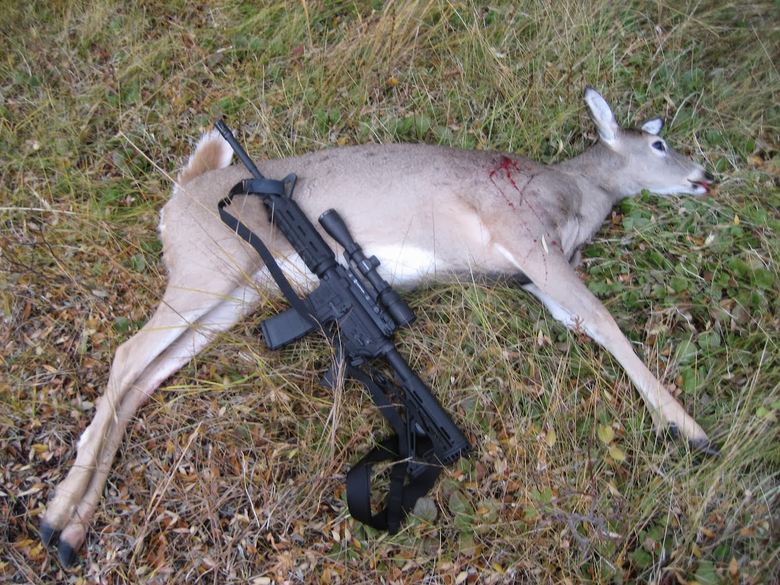 1 shot, 1 kill, w/ a .223 - Hunting Forum