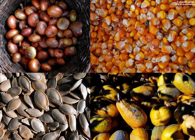 adunaturi de toamna: ceapa, boabe de porumb, seminte de dovleac si dovleci galbeni