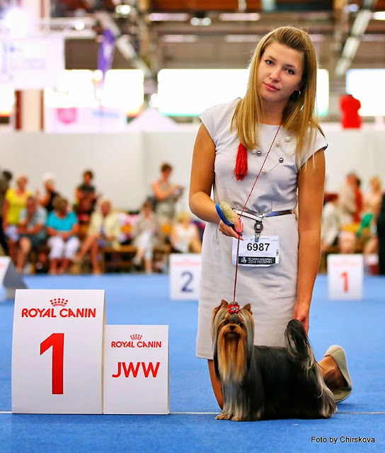 World Dog Show-2014 117