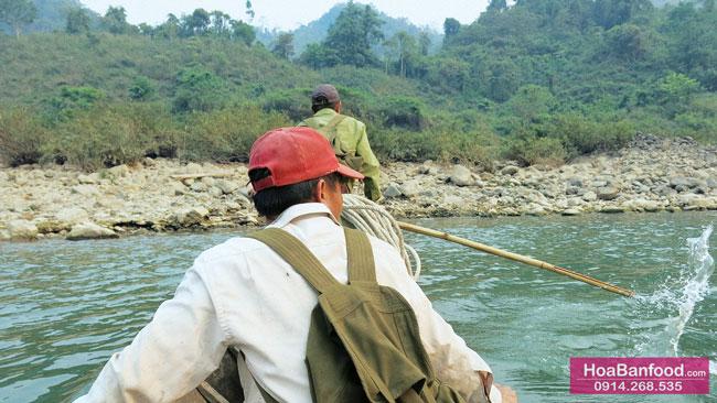 Khai thác Mật Ong Rừng ở Lai Châu - 3