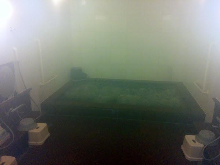 Baño japonés
