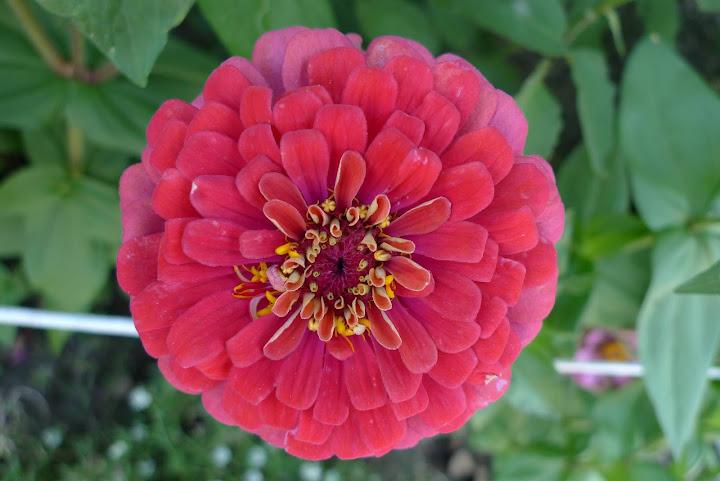 kwiatek nr 1