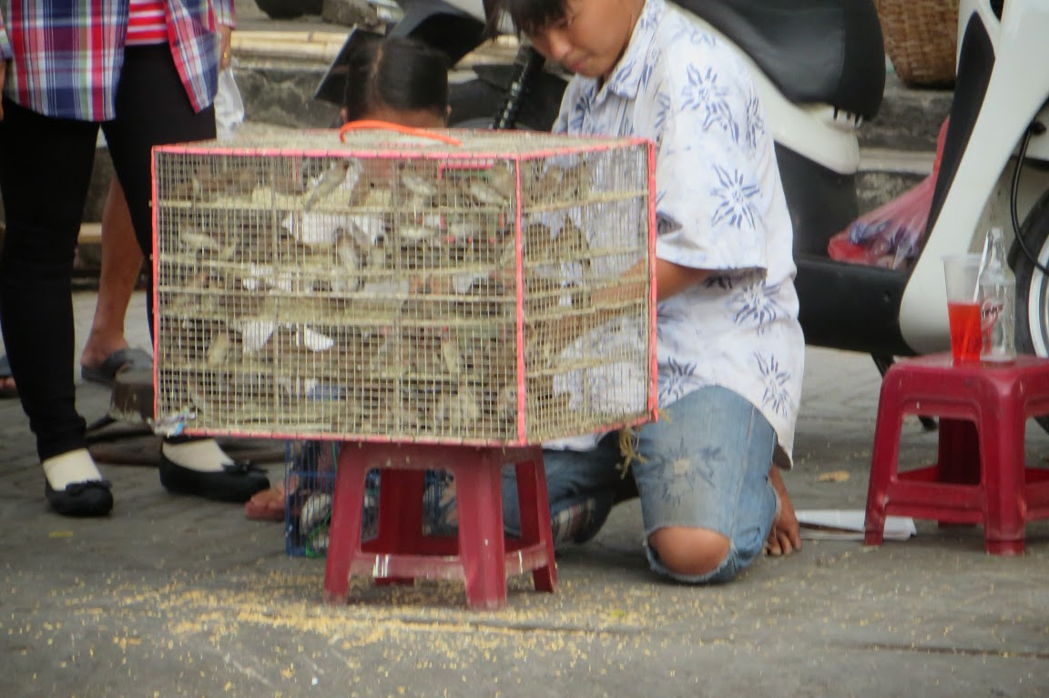 Bird Caged, Vietnam