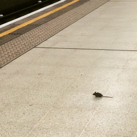 mice-on-the-tube
