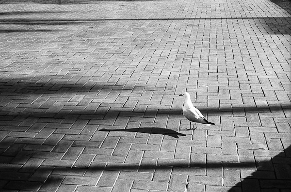 A Seagull in Light and Shadows