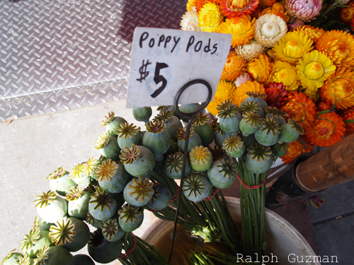Ferry Plaza Farmers Market - San Francisco - RatedRalph.com
