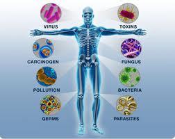 Mekanisme Kekebalan Tubuh, imunisasi, kekebalan tubuh, obat, obat kuat, penyakit, virus