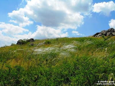 colilie pe Varful Calcata