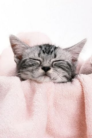 Cute Cat Sleepy Pictures Wallpaper For iPhone