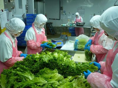 Đơn hàng chế biến thực phẩm rau củ quả cần 9 nữ TTS làm việc tại KANAGAWA Nhật Bản tháng 12/2016