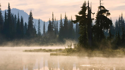 Reflection Lake With Mist, Mount Rainier National Park, Washington.jpg