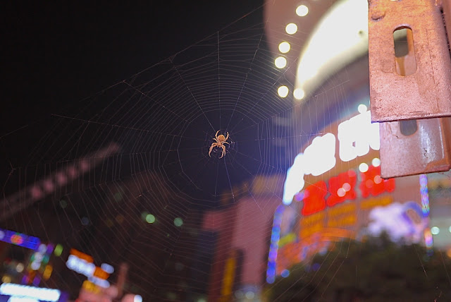spider in a web in Changsha, Hunan, China