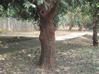 https://lh4.googleusercontent.com/-lrNBmZ6eRFg/T3wGvDPn1PI/AAAAAAAAAQo/93tkHj06zkw/s1600/ZZ+Unknown+085+Tree+-+0003.jpg