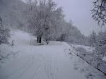 2011_01_30_3MTB_sulla_neve