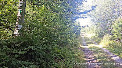 zielonym szlakiem na Orlicę