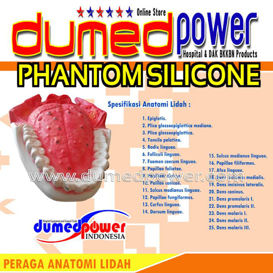 Phantom-Alat-Peraga-Anatomi-Lidah-Dumedpower