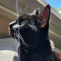 Honeybun's avatar