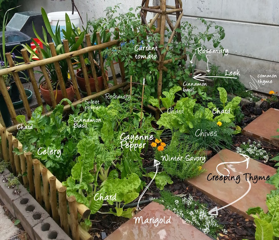 Back Yard Potager: 2 Month Progress Photos On Potager Garden