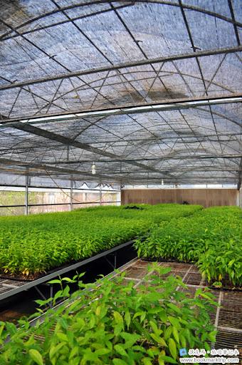 芬園花卉生產休憩園區 - 室內苗圃