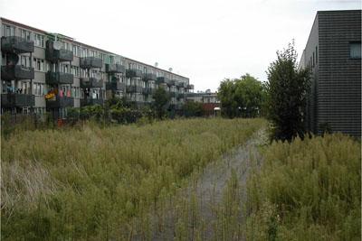 Van schooltuin tot Haagse Sporttuin