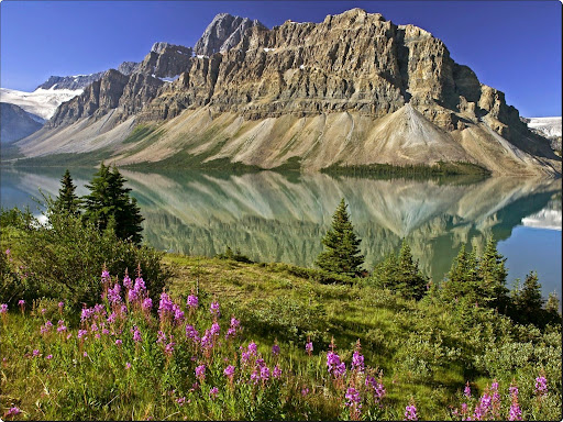 Bow Lake and Flowers, Banff National Park, Alberta, Canada.jpg