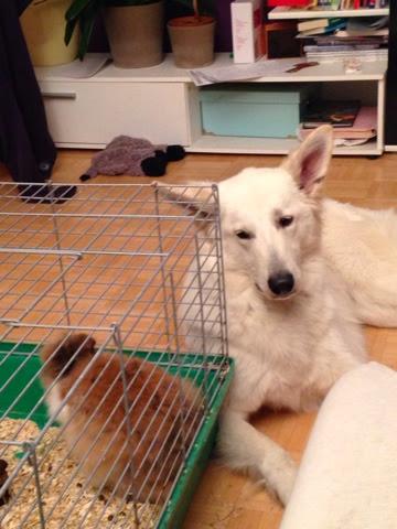 blogger-image-967648428 %Hundeblog