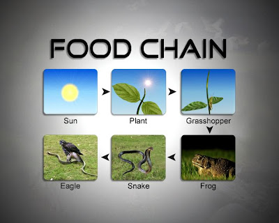 Tropical Rain Forest on Wetland Food Chain Example