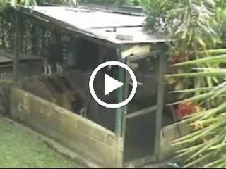 Video: O Fugitivo