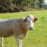 Friendly beast in Congewai Valley (362138)