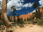 Sprachaufenthalt USA  - Bryce Canyon