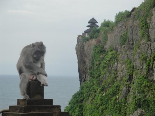 Uluwatu Monkey Forest Temple - Pecatu Badung Denpasar Bali Holidays, Tours, Attractions