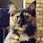 Paddy MeBoy avatar image