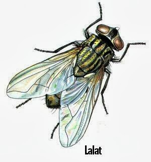 Alternatif Untuk Mengusir Lalat