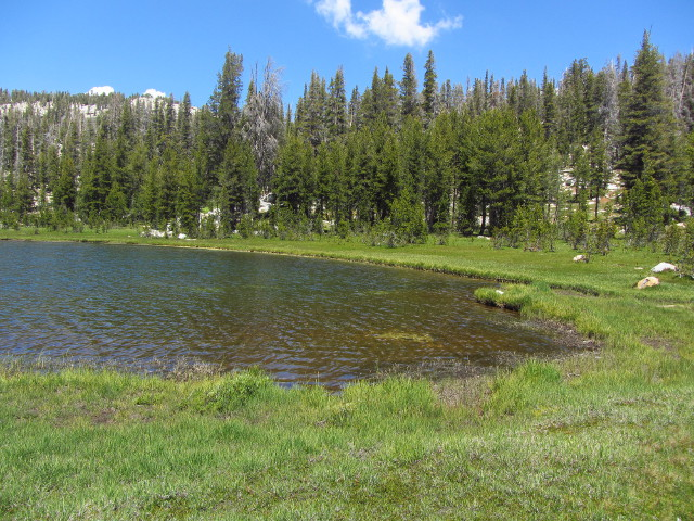 lake and meadow