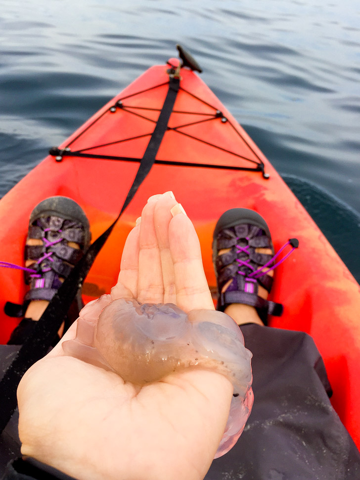 Holding a Melibe while Kayaking Monterey Bay.