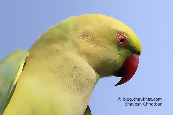 A beautiful female parrot