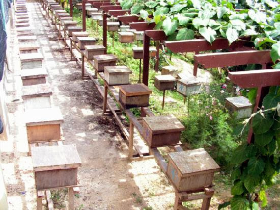 Ee-Feng-Gu-Honey-Bee-Farm