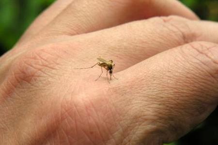 Todo sobre el virus de Chikungunya