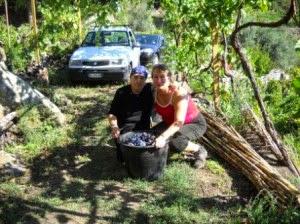 Принимаю активное участие в сборе винограда