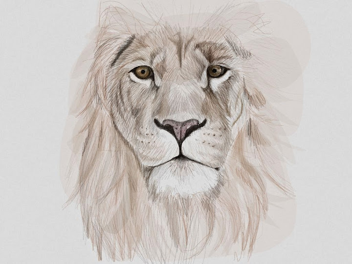 lion king made with Sketches